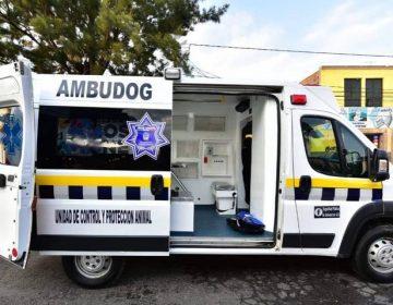 Conoce el municipio más 'dog friendly' de San Luis Potosí