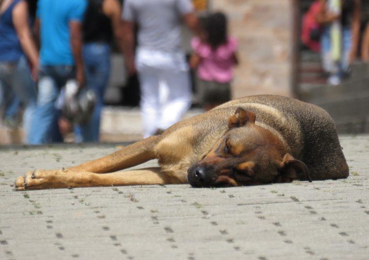 VIDEO | Captan a elementos de Protección Civil torturando a un perro en Cadereyta, Querétaro