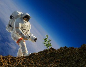 China hace historia en la Luna: consigue que germinen semillas de algodón