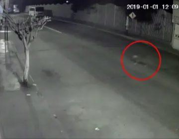 """VIDEO Fiscalía presenta video que """"desmiente"""" maltrato al perro Miguel; en redes afirman que está editado"""