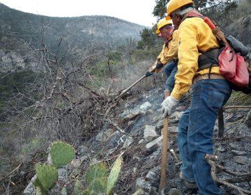 El 80% del incendio en Arteaga está extinguido