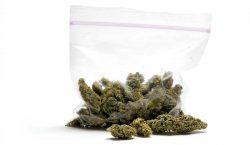 ¿Sabemos suficiente de los efectos que provoca la marihuana en…