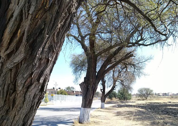 Inicia Pabellón de Arteaga su conversión en Nicho Ecológico del Mezquite