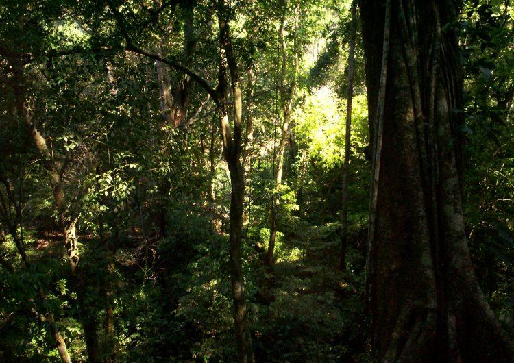 Matar árboles podrá pagarse hasta con diez años de cárcel