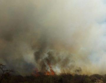 Intencionales 20% de incendios forestales en Oaxaca