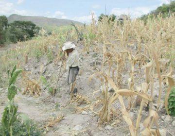 Reducción del 80% para apoyo al campo poblano por contingencias climáticas