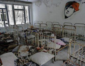 Vida en Chernóbil: cómo han sobrevivido algunos animales pese al desastre nuclear en la zona