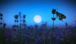 ¿Cuáles serían las consecuencias de una extinción masiva de insectos?