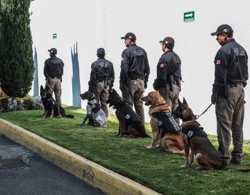 Los perros que juegan a ser policías