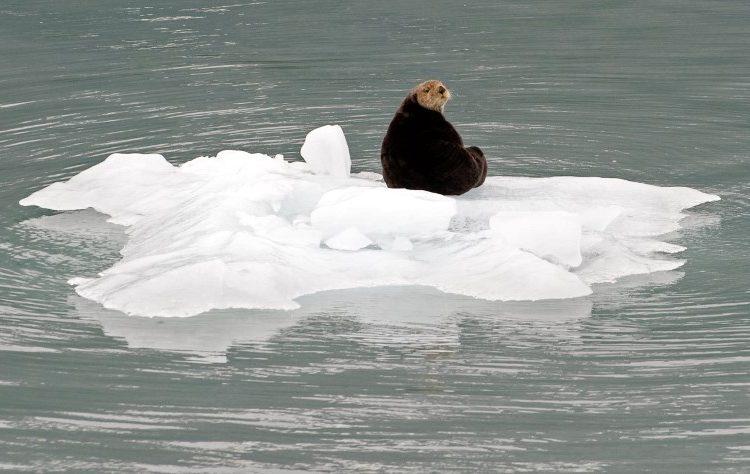 Reportan ola de calor en Alaska debido al cambio climático