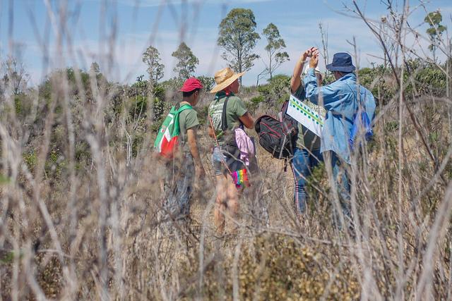 Utilizan activistas app para conteo de árboles en áreas verdes de Aguascalientes