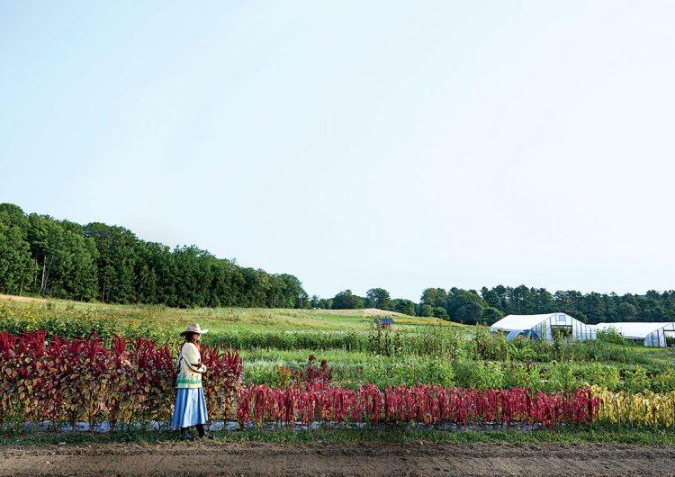 jardinería, huertos, vegetales, sembrar, naturaleza, salud