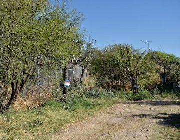 En buenas condiciones árboles reubicados de puente de San Ignacio: gobierno