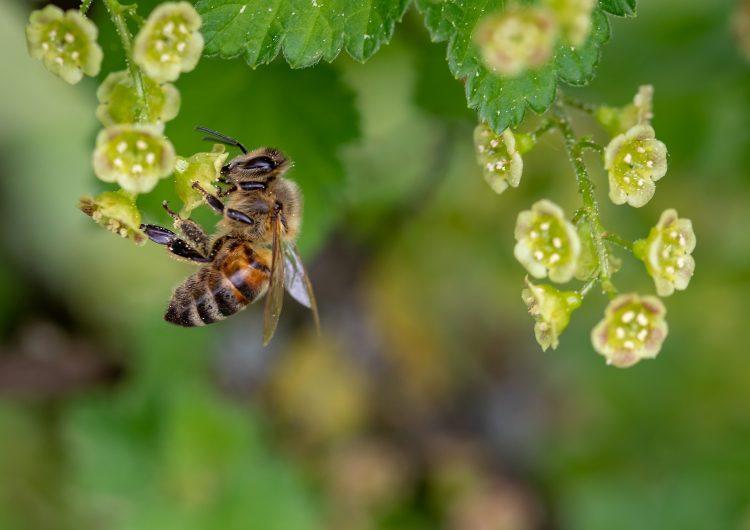 No destruyas enjambres de abejas: tips para evitar riesgos a la salud