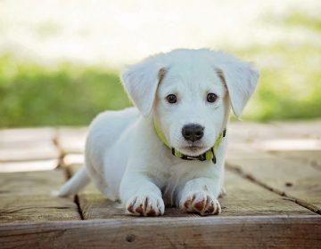 Realizan campaña de esterilización de mascotas en Universidad Cuauhtémoc