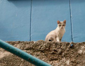 Científicos proponen matar a los gatos para rescatar a especies en peligro de extinción