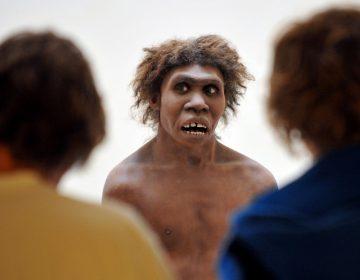 El cambio climático orilló a unos neandertales a practicar el canibalismo