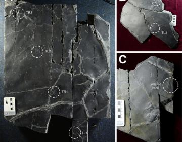 Descubren huellas de dinosaurio con rastros de piel en Corea del Sur