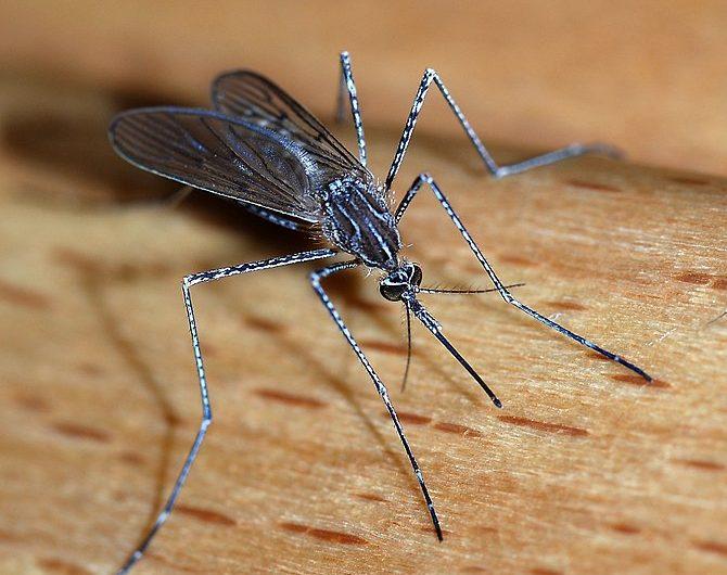 Coahuila emite medidas para evitar propagación de mosquito Aedes Aegypti