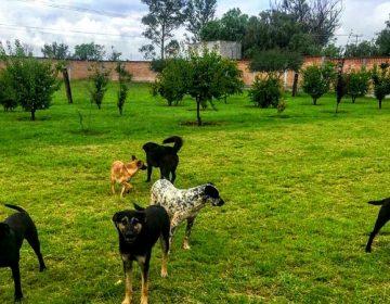 Propone Temo Escobedo crear centro de bienestar y control animal en Pabellón