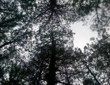 Ocupa Oaxaca tercer lugar nacional en bosques certificados