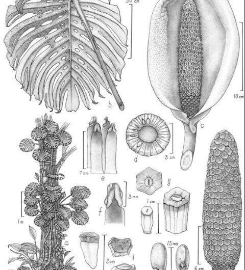 Mexicano gana concurso de ilustración botánica en Australia