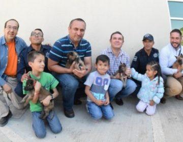 """Policía """"perrona""""; cuatro cachorros se unen a las filas de Seguridad Ciudadana"""
