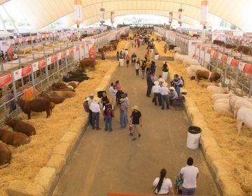 Se inauguró la Exposición Ganadera de la FNSM 2019