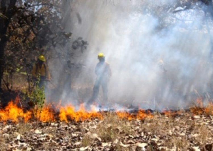 Contribuye cambio climático al aumento de incendios forestales