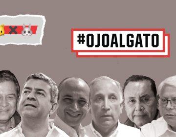 Nace #OjoalGato; mostrarán hechos que desalientan el voto en BC | #GatoxLiebre