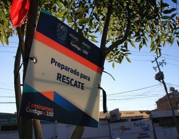 Asegura Gobierno que sobreviven 85% de árboles trasplantados en Antiguo Camino a San Ignacio