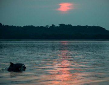 """""""Acuerdo Global por la Naturaleza"""": Así es como podemos salvar la biodiversidad de la Tierra"""