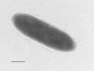 Bacteria que come petróleo es descubierta a 11 mil metros bajo el nivel del mar