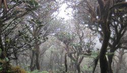 El cambio climático podría secar el 80% de los bosques…