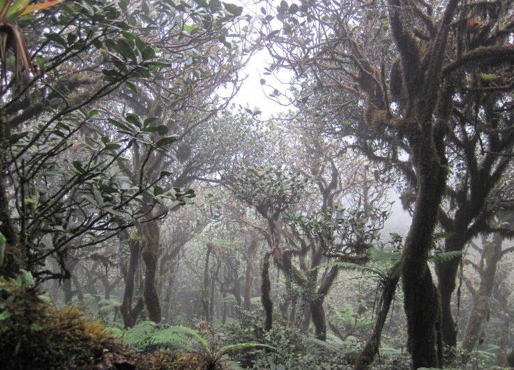 El cambio climático podría secar el 80% de los bosques nublados del hemisferio occidental