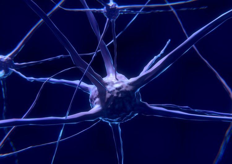 Científicos logran revertir la pérdida de memoria temporalmente con descargas eléctricas
