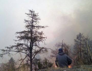 Consume incendio bosque en Ocampo; esperan controlarlo hoy