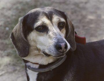 Proponen asociaciones considerar el maltrato animal como delito penal