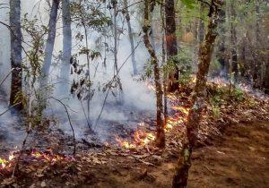 Sin control incendio en San Miguel Chimalapa, Oaxaca