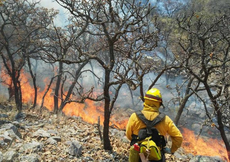 Anticipa PC alza de incendios en temporada de calor