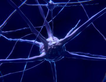 La estimulación cerebral con electricidad mejora la memoria de los adultos, revela estudio