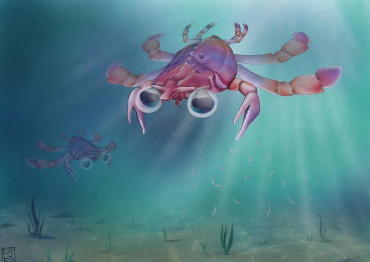 """Callichimaera Perplexa: Científicos descubren al """"ornitorrinco de los cangrejos"""" de 95 millones de años de antigüedad"""