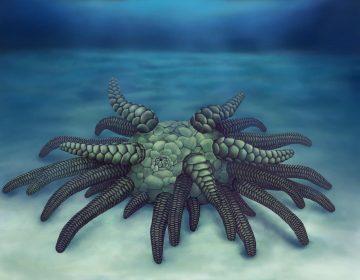 Sollasina cthulhu: descubren un monstruoso pepino de mar de 430 millones de años de antigüedad