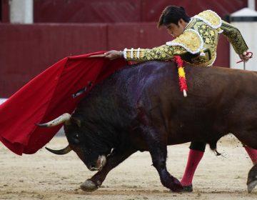 Las corridas de toros ¿una tradición que debería de ser prohibida?