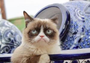 El emporio de Grumpy Cat: memes, juegos, película, y todos los productos que llevan su amargura