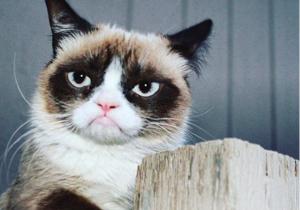 Grumpy Cat, la gata gruñona de internet, muere a los 7 años por complicaciones urinarias