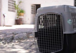 Culminó campaña de esterilización de mascotas en Pabellón de Arteaga