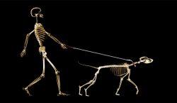 De lobo a tu mejor amigo: así han evolucionado las…