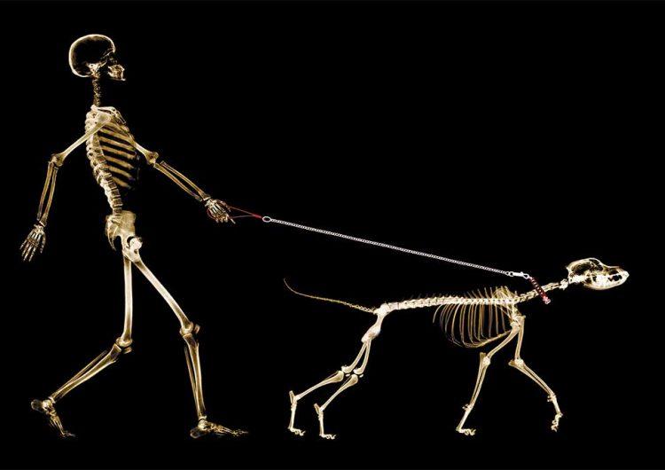 De lobo a tu mejor amigo: así han evolucionado las razas de perros