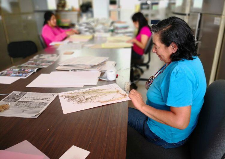 Resguarda Herbario del CIIDIR-Oaxaca 65% de especies de plantas nativas